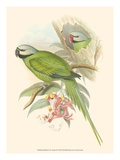 Small Bird of the Tropics II Posters by John Gould