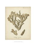 Coral Collection IV Reproduction procédé giclée par Johann Esper