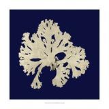 Seaweed on Navy IV Plakater af Vision Studio