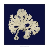 Seaweed on Navy IV Prints by  Vision Studio