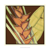 Striking Tropical IV Print by Jennifer Goldberger