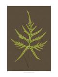 Ferns on Linen IV Art by  Vision Studio