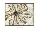 Fresco Flowerhead VI Prints by Nancy Slocum