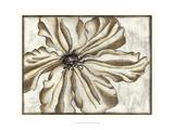 Fresco Flowerhead VI Prints by Nancy Slocum