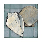Seashell Sketch II Prints by Tim O'toole
