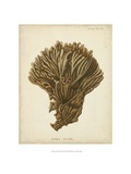 Coral Collection VI Reproduction procédé giclée par Johann Esper
