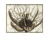 Fresco Flowerhead IV Prints by Nancy Slocum