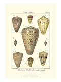 Cone Shells, Pl. 333 Prints by Denis Diderot