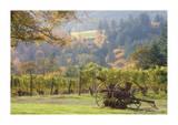 Oregon Vineyard 2 Giclee Print by Donald Paulson