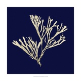 Seaweed on Navy II Prints by  Vision Studio