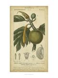 Exotic Botanica IV Print by  Turpin