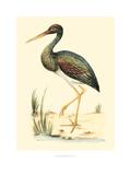 Water Birds II Art par H.l. Meyer