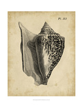 Vintage Diderot Shell III Prints by  Vision Studio