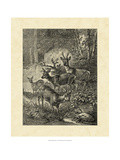 Vintage Roe Deer I Prints by Friedrich Specht