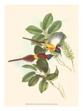 Small Bird of the Tropics III Plakater af John Gould