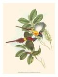 Small Bird of the Tropics III Reprodukcje autor John Gould