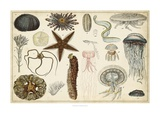 Antique Sealife Chart Giclee Print by Vision Studio