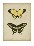 Antique Butterfly Pair I Prints by  Vision Studio