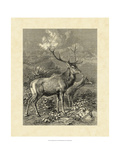 Vintage Roe Deer II Prints by Friedrich Specht