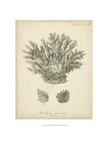 Coral Collection VII Reproduction procédé giclée par Johann Esper