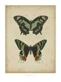 Antique Butterfly Pair II Giclee Print by Vision Studio