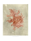 Coral in Terra Cotta Poster by  Vision Studio