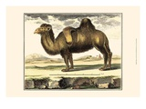 Diderot Camel Posters by Denis Diderot