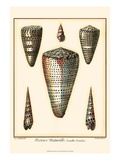 Redoute Shells II Posters by Pierre-Joseph Redouté