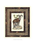Rustic Big Horn Prints by  Vision Studio