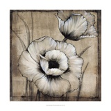 Neutral Poppies I Giclee Print by Tim O&#39;toole