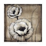 Neutral Poppies II Giclee Print by Tim O&#39;toole