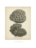 Coral Collection V Reproduction procédé giclée par Johann Esper