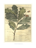 Weathered Oak Leaves II Prints by Gerard Paul Deshayes