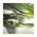 Dew Drops 3 Giclee Print by Florence Delva