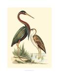 Water Birds III Reproduction procédé giclée par Meyer H.l.