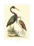 Water Birds III Giclee Print by Meyer H.l.