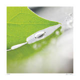 Dew Drops 6 Giclee Print by Florence Delva