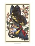 Butterfly IV Giclee-tryk i høj kvalitet af  Vision Studio