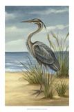 Shore Bird II Reproduction giclée Premium par Ethan Harper