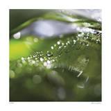 Dew Drops 5 Limitierte Auflage von Florence Delva