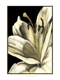 Graphic Lily III Print by Jennifer Goldberger