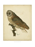 Antique Nozeman Owl IV Poster by  Nozeman
