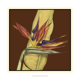 Striking Tropical I Giclee Print by Jennifer Goldberger