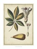 Ivory Botanical Study IV Poster by Vision Studio