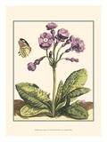 Garden VIgnette I Prints by Johann DeBry