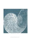 Coastal Menagerie VI Print by  Vision Studio