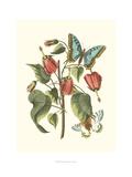 Midsummer Floral I Poster by  Vision Studio