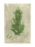 Emerald Seaweed I Print