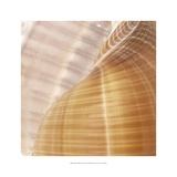 Organic Elements III Prints by  Vision Studio