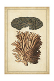 Coral Companions I Prints by  Vision Studio